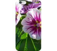Magenta Burst Flowers iPhone Case/Skin
