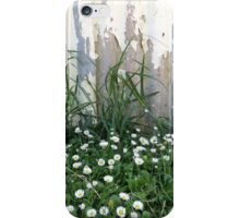Seaside Daisies iPhone Case/Skin