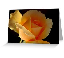 THE APRICOT ROSE Greeting Card