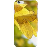 Golden Leaves iPhone Case/Skin