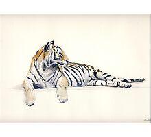 Siberian / Bengal Tiger Photographic Print