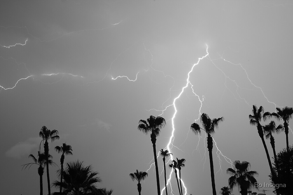 Black and white of a Lightning Storm and Tropical Palm Trees by Bo Insogna