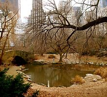 Fall in Central Park by funkimunki626