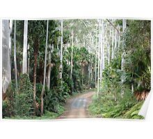Wallingat State Forest Drive Poster