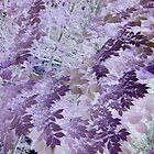 Beautiful purple & pink tree leaf photo from a childs view altered art ! by bkind2animals