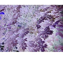 Beautiful purple & pink tree leaf photo from a childs view altered art ! Photographic Print