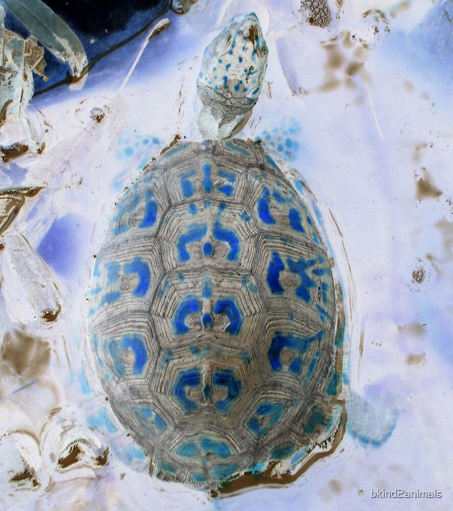 gorgeous eastern box turtle maryland from a childs view altered art photo by bkind2animals