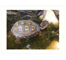 Eastern box turtle from a childs view color photo  Art Print