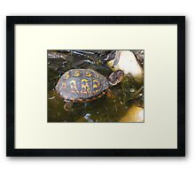 Eastern box turtle from a childs view color photo  Framed Print