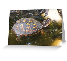 Eastern box turtle from a childs view color photo  Greeting Card