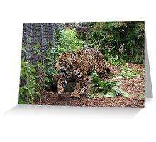 NC leopard Greeting Card