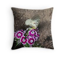 Butterfly on Sweet Williams Throw Pillow