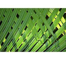 THE PALM CURTAIN Photographic Print
