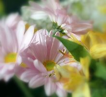 Softness by Kathleen Struckle