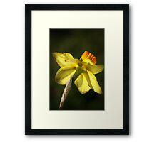 Daffodils Skirt Framed Print