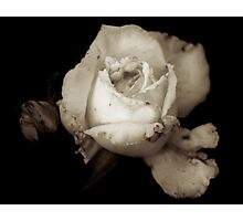 Stained Ivory Photographic Print