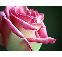 Shimmering Elegance Photographic Print