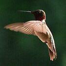 The Aerialist by Lolabud