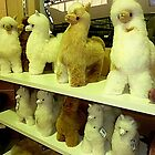 *Alpaccas - Creswick Knitting Mills - Vic. by EdsMum