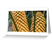Cycad - Gone to seed. Greeting Card