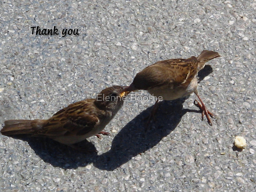 Thank you by Elenne Boothe