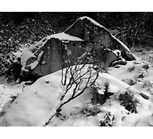 photoj Black & White, Winter Snow Photographic Print