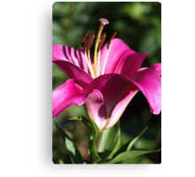 Flowering Pink Lily Canvas Print