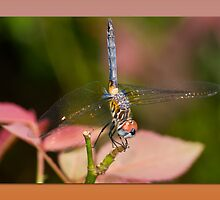Dragonfly Greetings by Bonnie T.  Barry