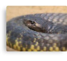 Tiger snake Canvas Print
