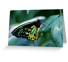 Cairns Birdwing Greeting Card