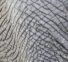 Elephant Skin - Natural Patterns and Textures by LivingWild
