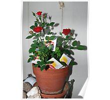 ornamental tea roses Poster
