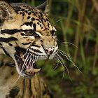 Snarling cat by Ann Heffron