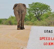 Elephant - Tourists go Slow by LivingWild