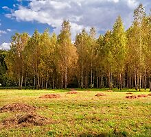 Glade with birches by Serhii Simonov