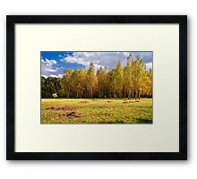 Glade with birches Framed Print