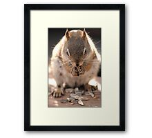 Seed Thief Framed Print
