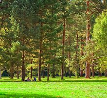 Picnic in the pine forest in the autumn warm day by Serhii Simonov