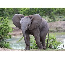 Elephant calf at watering hole Photographic Print