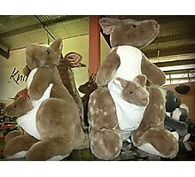 Kangaroos & Joeys Creswick Knitting Mills - Vic. Photographic Print