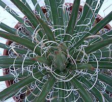 Cactus by shortarcasart