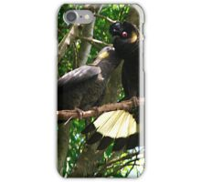 Yellow-Tailed Black Cockatoo - Male Adult & Young iPhone Case/Skin