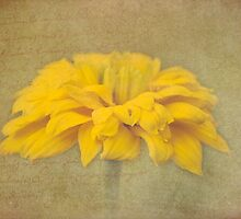 Faded Memory - Yellow by SusieBImages