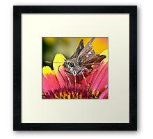 Ver'Moth'   Cocktail  ! Framed Print