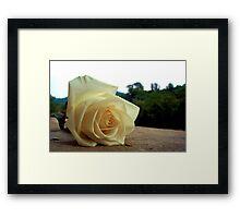 A Rose For Tina Framed Print