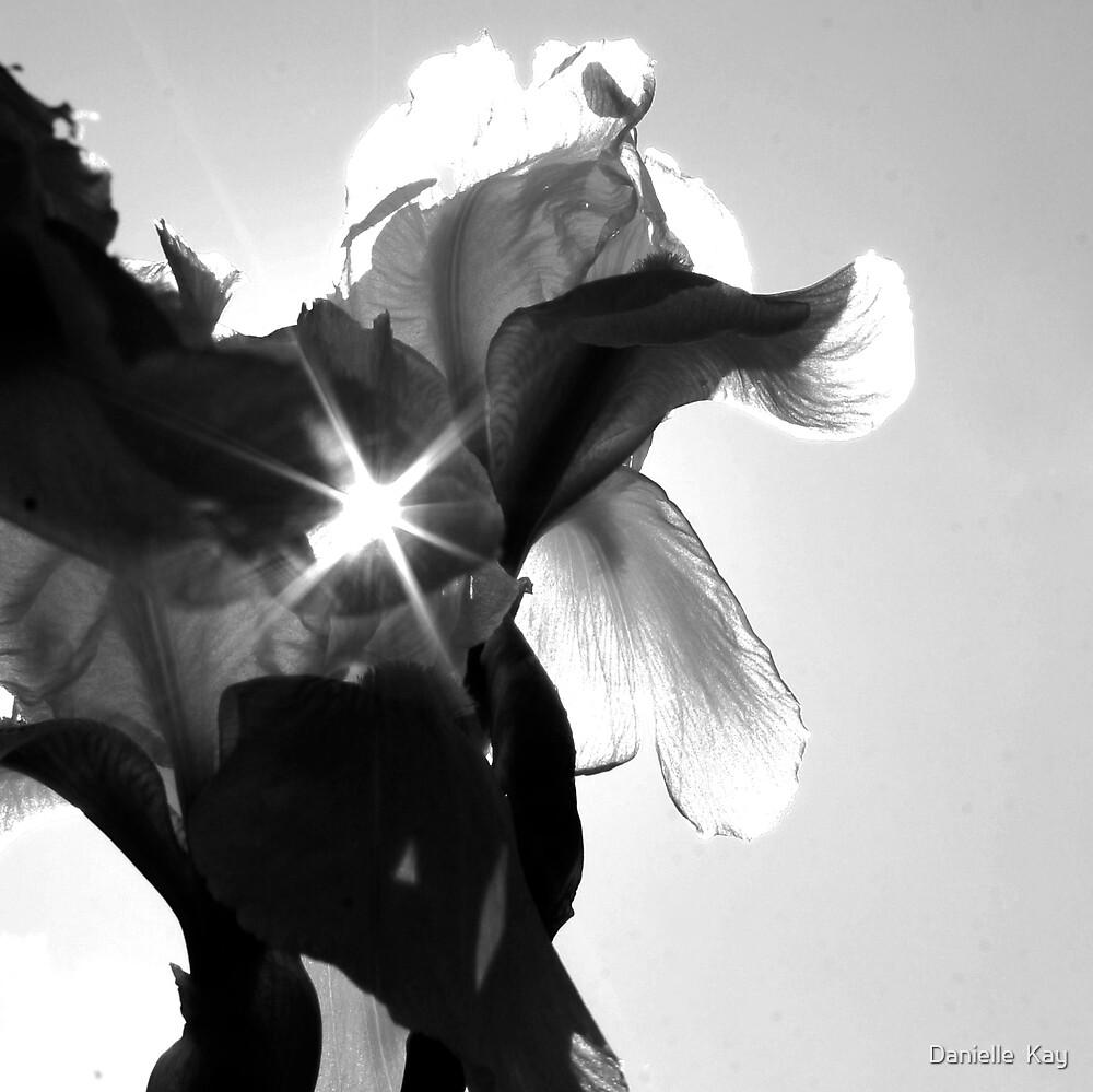sun through lily by Danielle  Kay