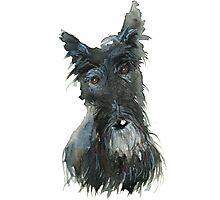 Barney The Scottie Dog Photographic Print