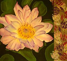 Water lily by Pam Wilkie