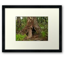 Ancient Tingle Tree Framed Print