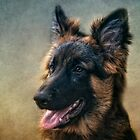 German Shepherd  by lucyliu